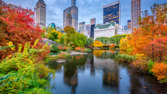 Image of Central Park in New York City.
